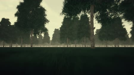alaszka : Gloomy dark forest and fog