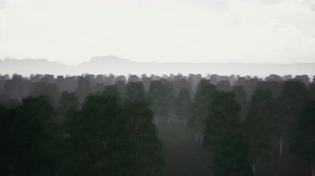 mohás : Gloomy dark forest and fog