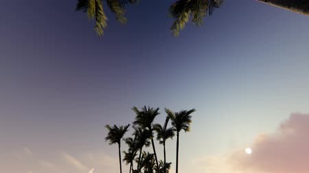 neighbor : Palm tree alley on sunset Stock Footage