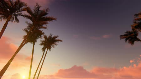 palmeira : Palm tree alley on sunset Stock Footage