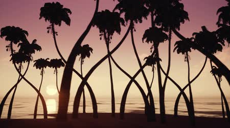 grande angular : Silhouettes of palm trees on ocean beach over sunrise background. Vídeos