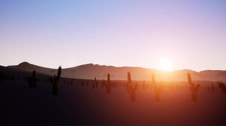 vaqueiro : Time lapse of big sunrise over desert with silhouette of lone cactus in foreground