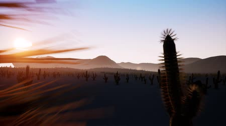 západ : Time lapse of big sunrise over desert with silhouette of lone cactus in foreground