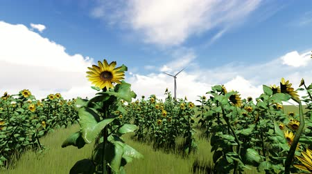 İskandinav : Wind generator on a field of sunflowers