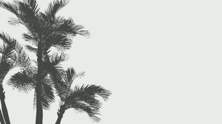 palmtree : Palm tree shadows on sand footage. Coconut palms silhouettes on ocean beach. Leaves swaying in wind, sea breeze realistic animation. Tropical, exotic island trees isolated on grey background 4k Stock Footage