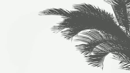 palmtree : Swaying palm leaves silhouettes in wind footage. Coconut palm tree shadow on island beach sand. Tropical fronds in sea breeze realistic animation. Exotic close up leaves isolated on grey