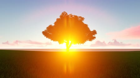 wood glade : Lone tree in morning, evening sunlight seamless footage Stock Footage
