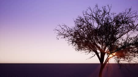 through leaves : Sunbeams shining through tree branches realistic 3d footage