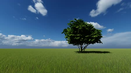 vacant : One Tree in a Green Meadow Stock Footage