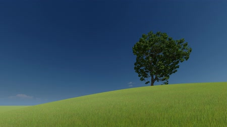 щит : 3d green picture. 3d render. One tree on a green hill and clear sky. Стоковые видеозаписи