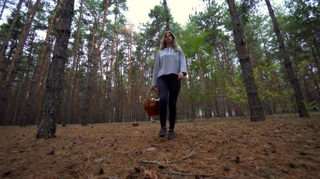 кедр : Beautiful girl walk in the forest. The girl went into the woods for mushrooms. Wild nature.