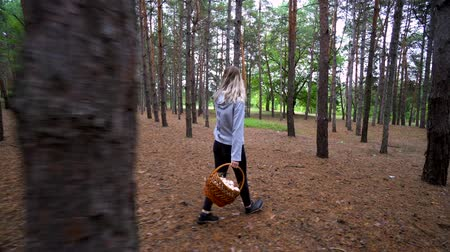 кедр : Beautiful walk in the forest. The girl went into the woods for mushrooms. Wild nature.
