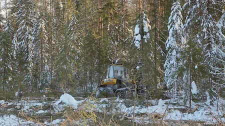 emtia : harvesting work in the forest in winter