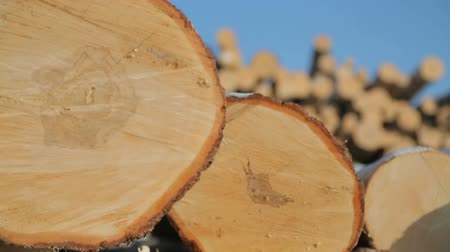 felling : warehousing of logs on logging Stock Footage