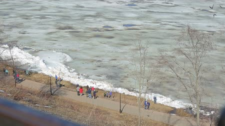 polana : ice floes float on the river in the spring during the ice drift Wideo