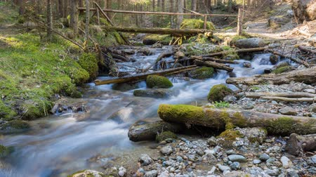 ribeiro : deep in the forest, time lapse, forest scene at small creek in the spring Stock Footage