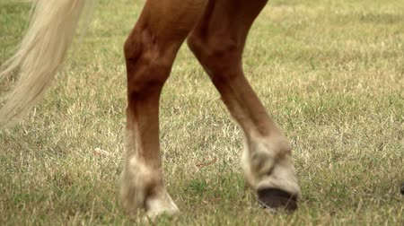 horse walking on grass during autumn time. Slow motion
