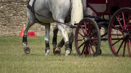 Two horses carriage contest. Slow motion
