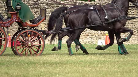 harness : Two horses carriage contest. Slow motion