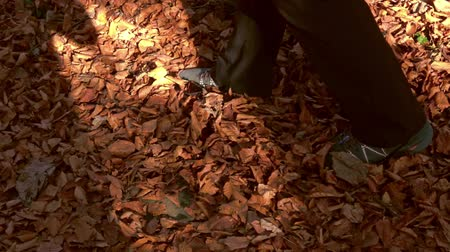 vybledlý : hikers legs through fall leaves, in the autumn forest. Slow motion