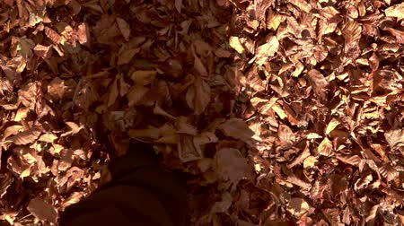 hikers legs through fall leaves, in the autumn forest. Slow motion