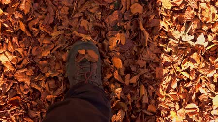 hikers legs through fall leaves, in the autumn forest