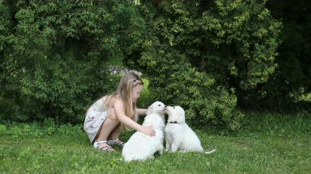 retriever : Beautiful little girl playing with the puppies in nature