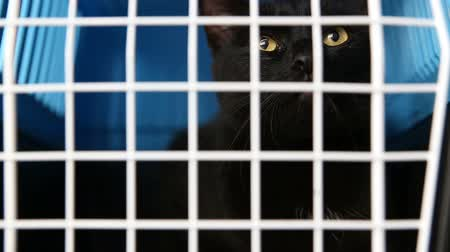 zbloudilý : cruel treatment of domestic pets. A black cat sits in a cage in a nursery for abandoned animals. Dostupné videozáznamy