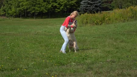 young woman having fun with a big dog on the meadow