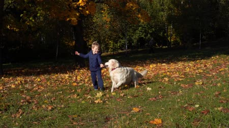 happy little boy of european appearance is having fun playing in the autumn park with a big beautiful dog - slow motion