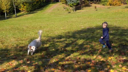 happy little boy of european appearance is having fun playing in the autumn park with a big beautiful dog Стоковые видеозаписи