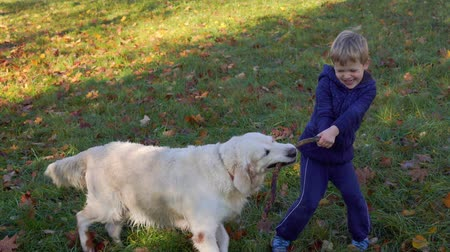happy little boy of european appearance is having fun playing in the autumn park with a big beautiful dog Dostupné videozáznamy