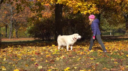 happy little girl of european appearance is having fun playing in the autumn park with a big beautiful dog