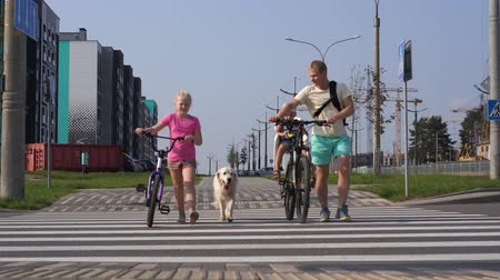 life with pets in the modern city - a family with bikes and a big dog crossing the road
