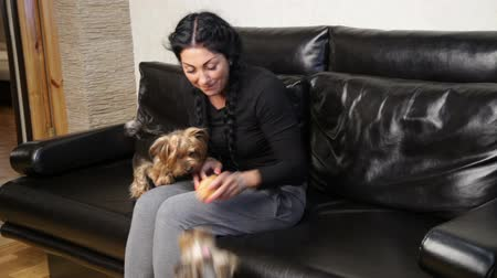yorkie : Woman and two pets dogs