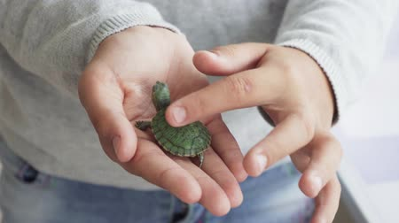Childs hand touching small green domestic turtle Стоковые видеозаписи