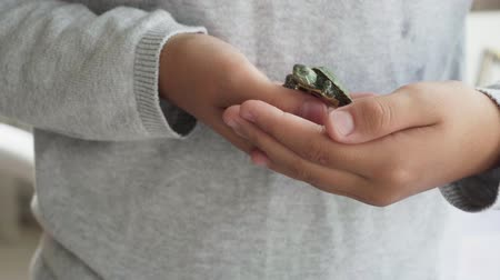 Child holds small green turtle in his hands