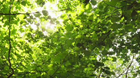 Suns rays make their way through foliage of trees in summer forest Стоковые видеозаписи
