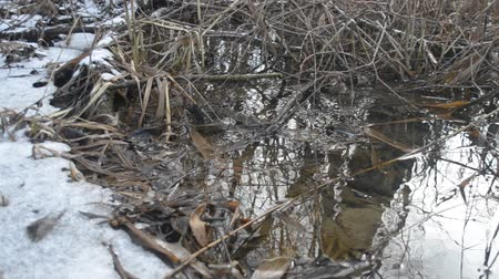 wavelet : Surface of water gently flowing in brook or pond in forest with melting ice and in spring and old leaves and twigs on the bottom. Stock Footage