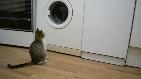 domestic animals : Cat watches a white working washing machine. Small kitten sits in front of white washing machine and looks at clothes spinning inside the rotating drum