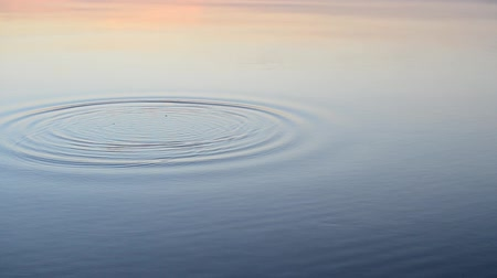 serene : Stone falls into calm water at sunset or sunrise producing circles on water surface.