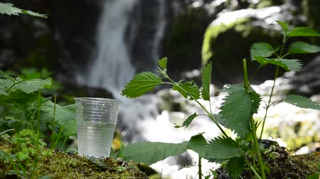 cena não urbana : glass of drinking water near the foliage waterfall Vídeos
