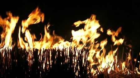 meşale : 4K Fire flame isolated on black background. UHD stock video