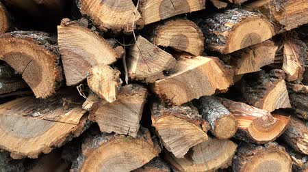 sawn : Dry chopped firewood logs in a pile. 4k uhd steadycam stock video