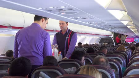 steward : Stewards serve the passengers. Serve food and drinks in the passenger cabin. UHD stock footage