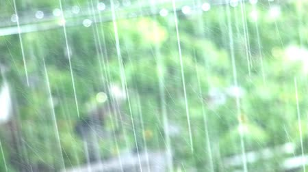 ulewa : A closeup shot of heavy rain with forest trees background LOOP. UHD 4K stock footage
