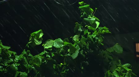 rainy : Strong winds and rain shook the trees in dark night. 4K UHD stock footage