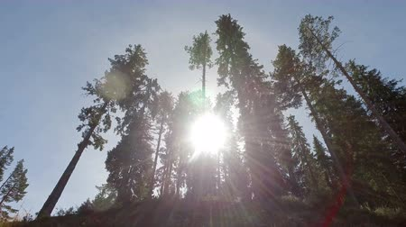 zálesí : Beautiful hiker pov of pine tree top and sun shining through Dostupné videozáznamy