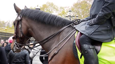 buckingham palace : Member of metropolitan police Cavalry on duty at Changing of the Guard ceremony in London