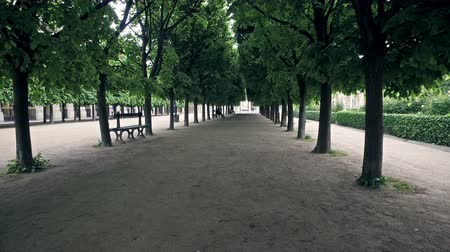 sepya : Sculpted trees alley in the garden of Royal Palace (Palais Royal) in Paris